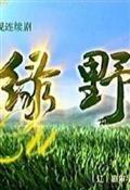 绿野剧情介绍